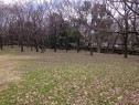 鳥屋野公園